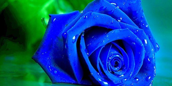 Ako možete naći ćup pun zlata na kraju duge onda sigurno možete naćiiplavu ružu.